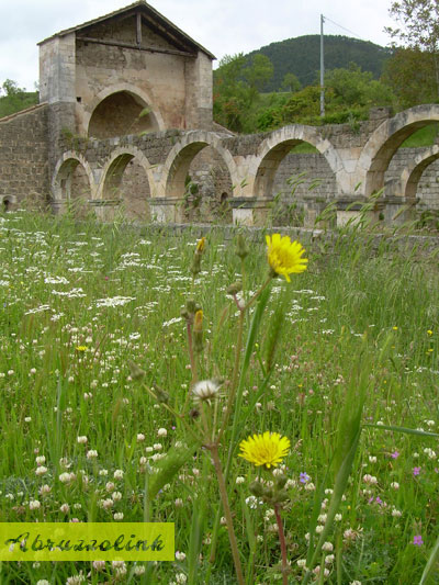 Santa Maria di Cartignano - side view with dandelions
