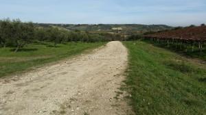 Vigneto e Uliveto Azienda Agricola Valentini Loreto Aprutino