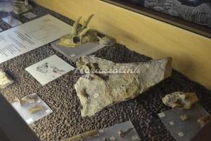 Scontrone - reperti fossili