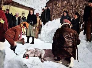 Uomini e lupi - Il lupo ucciso durante le riprese