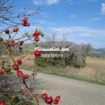 Sulla via di Barisciano (AQ)