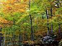 boschi d'abruzzo