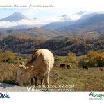 campotosto-animali-autunno-1