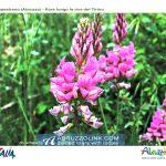 capestrano-tirino-passeggiata-fotografica-fiori